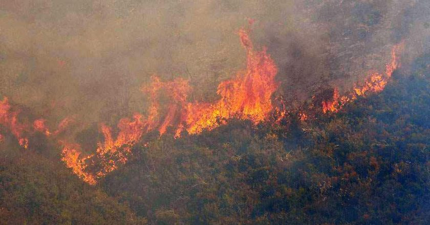 União Europeia envia ajuda para combater incêndios na Grécia e Itália